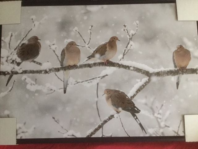 close-up of framed artwork, a photo on canvas of 5 mourning doves